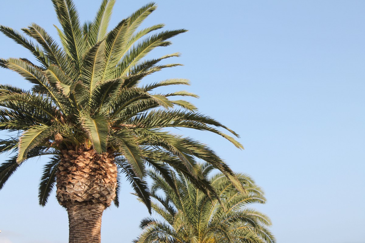 Fuerteventura travel diary