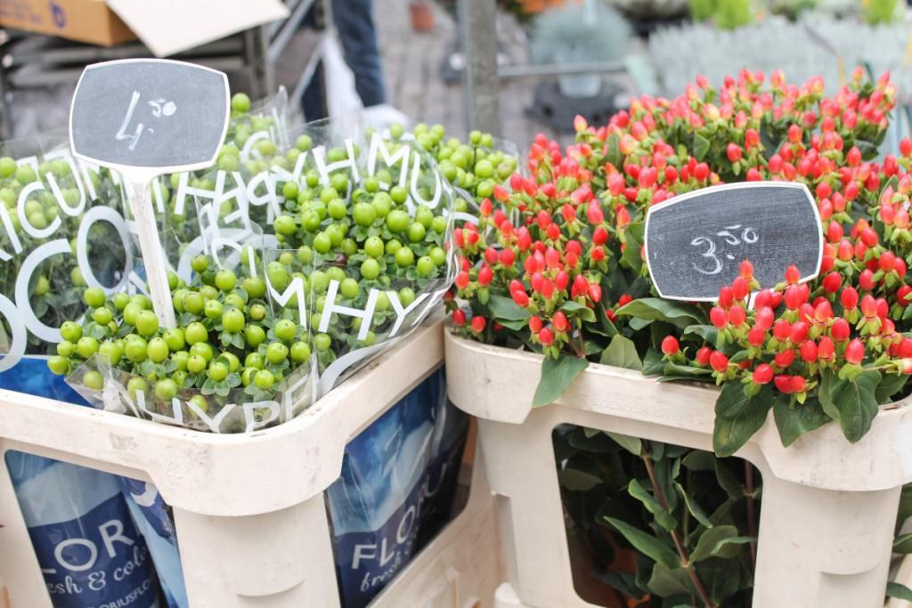 (Seventeen blooms) - 1 - roermond's market