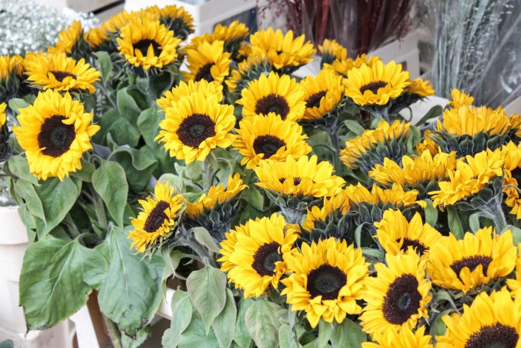 (Seventeen blooms) - 4 - roermond's market