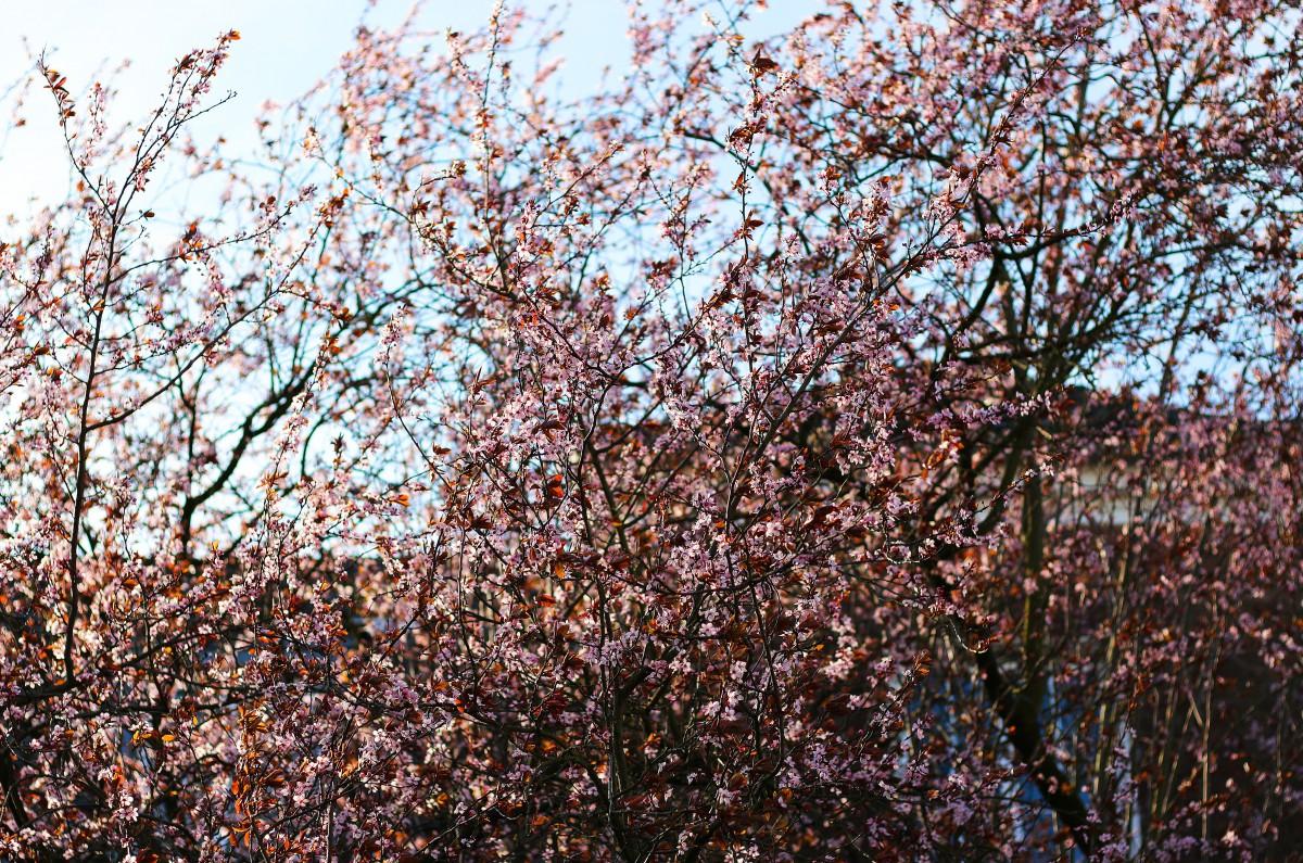 Blumen - 1_bearbeitet-1