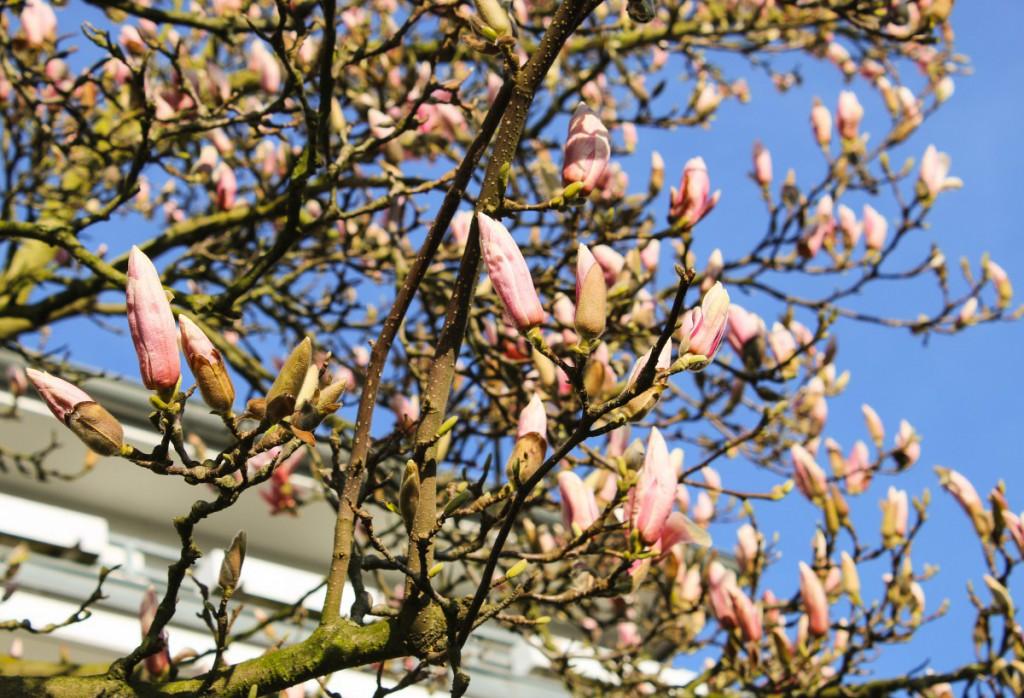Blumen - 7 - Spring